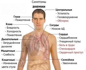 Как повысить гемоглобин в крови народными средствами быстро?