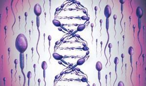 Фрагментация ДНК сперматозоидов: что это такое, методы исследования