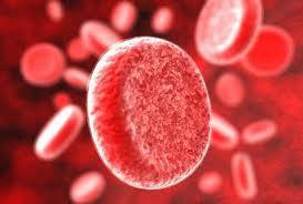 Гемолиз эритроцитов: причины, признаки, виды, лечение
