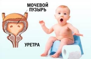 Повышены лейкоциты в моче у грудничка: возможные причины