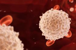 Норма лейкоцитов в крови у женщин – какой должна быть?